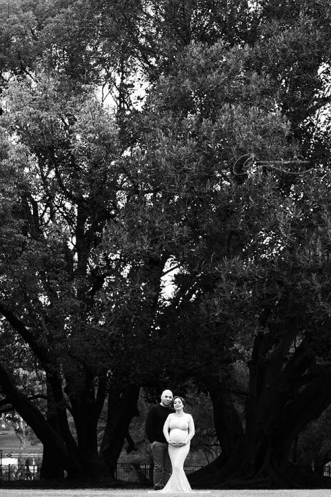 Hyde Park Perth | Maternity Photos under the enormous trees